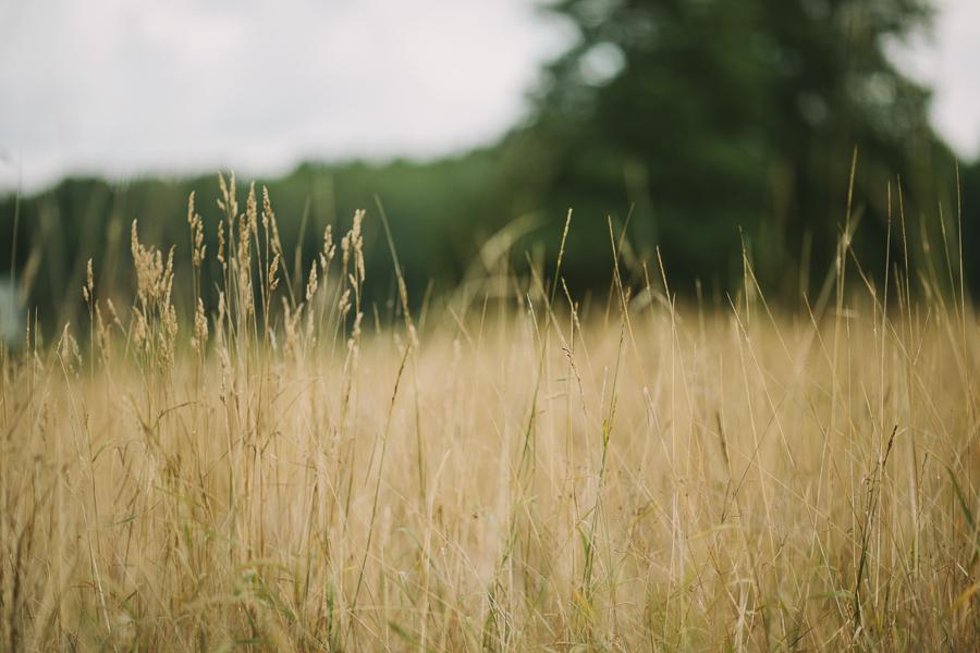 Gräsäng utanför Ramnäs