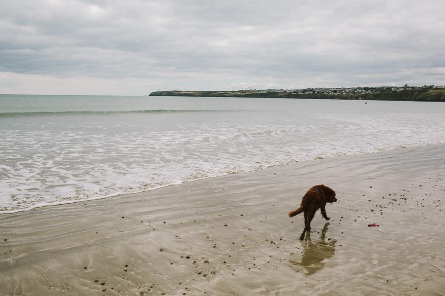 Dog walking towards the town