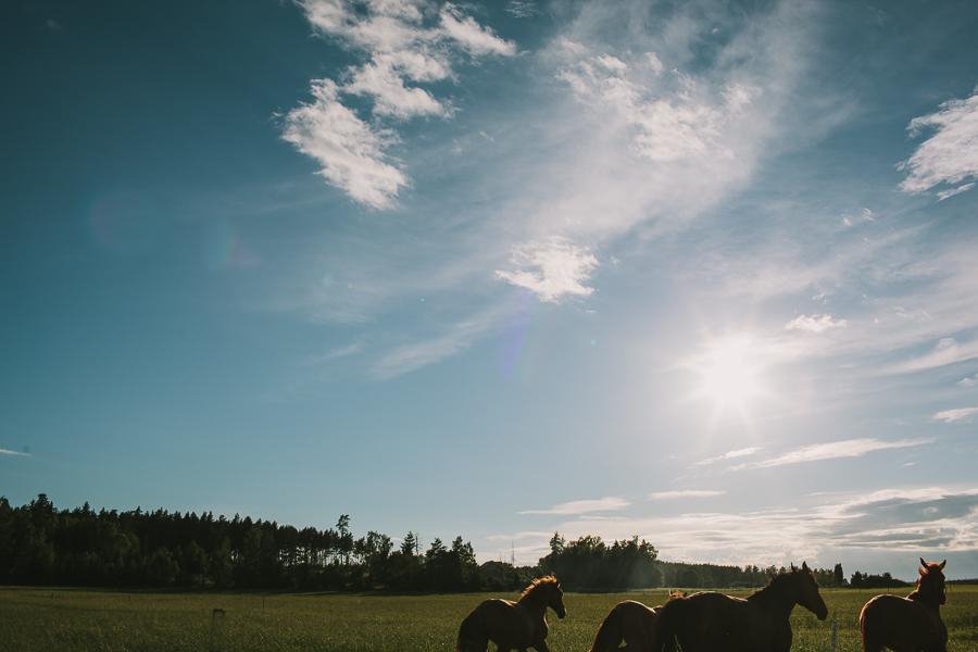 Hästar p sprng Madeleine Mattias