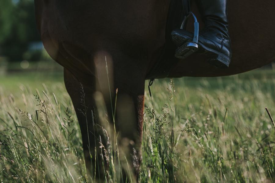 Häst i högt gräs Madeleine Mattias