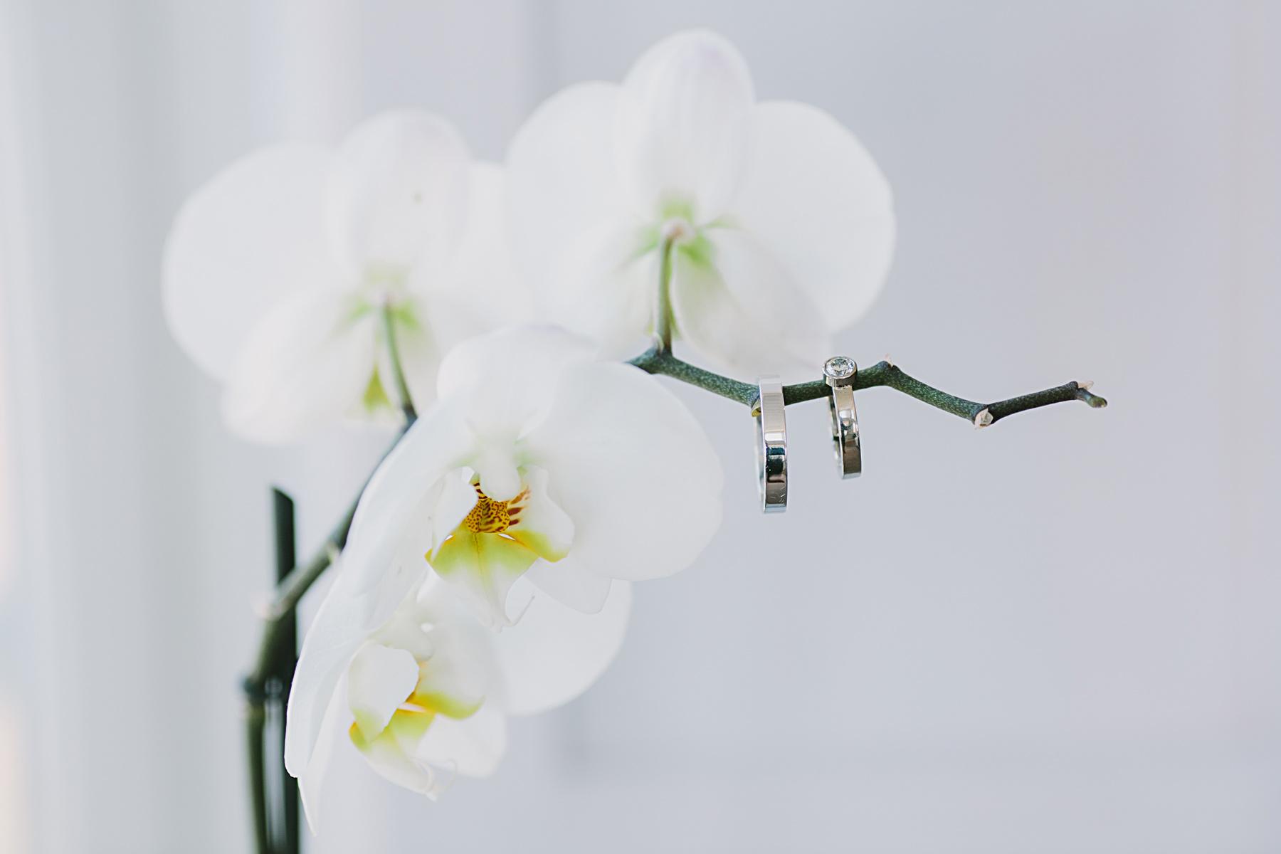 ringar och orkide