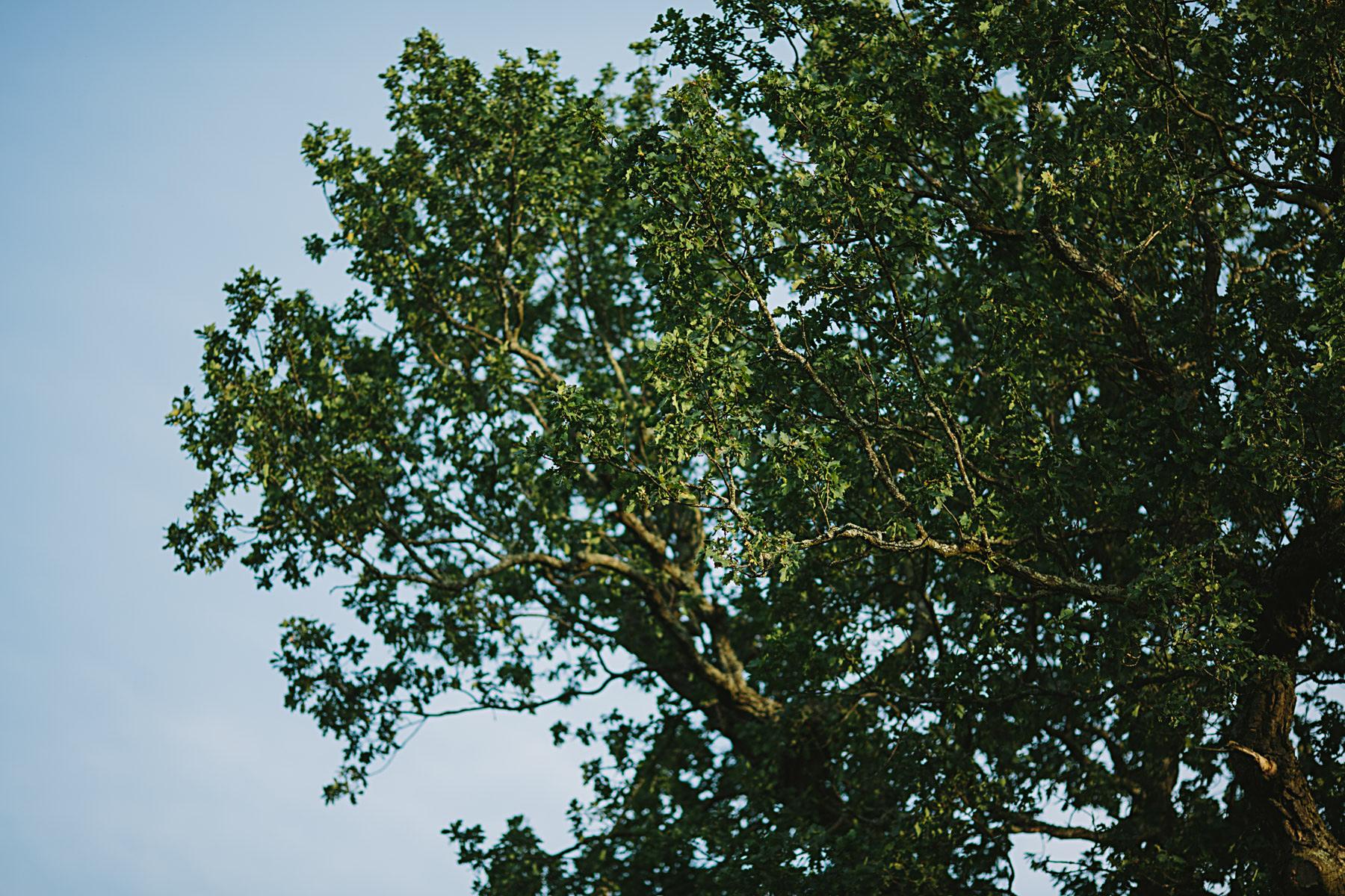 träd i parken