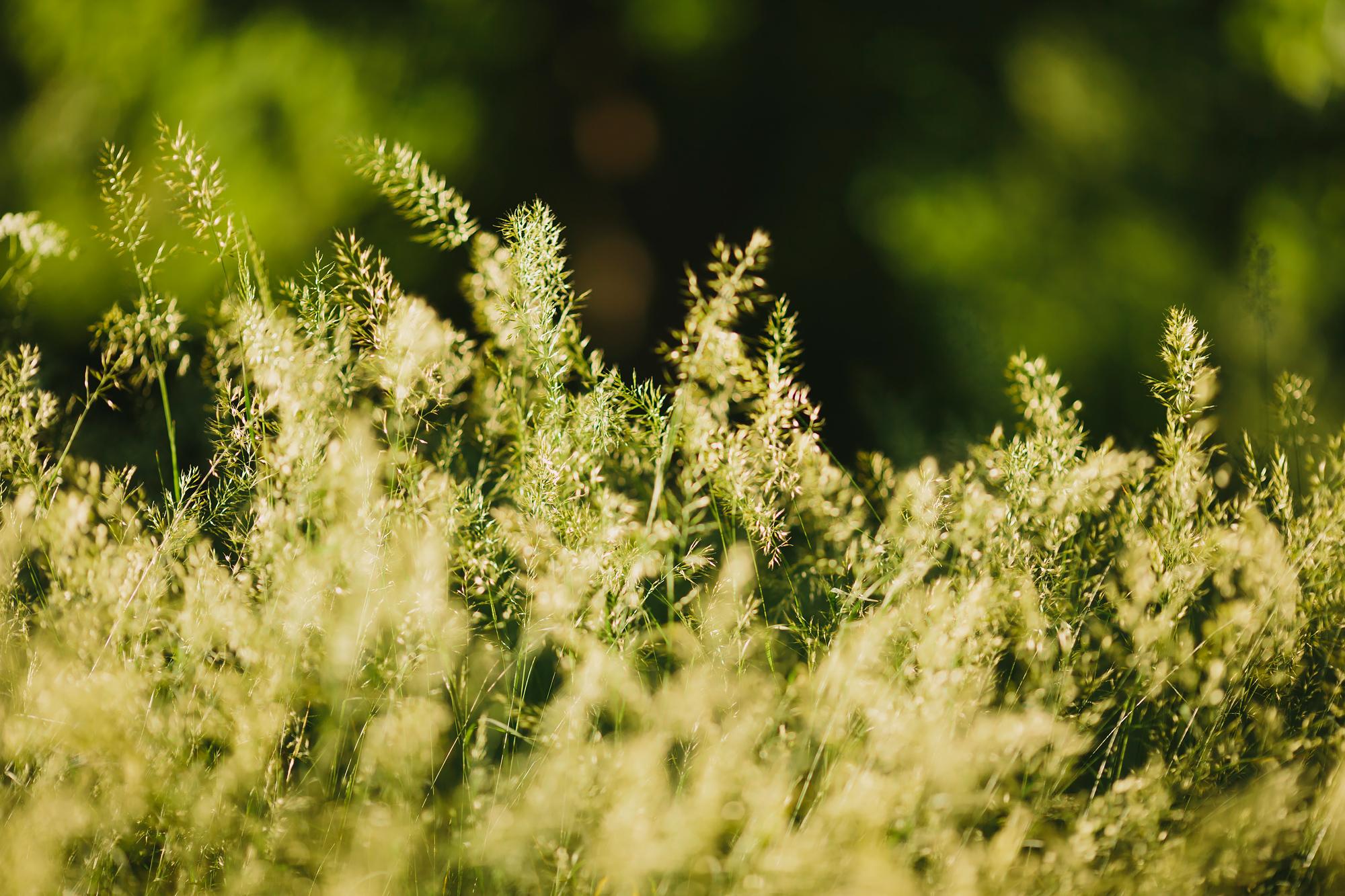 detaljbild på gräs