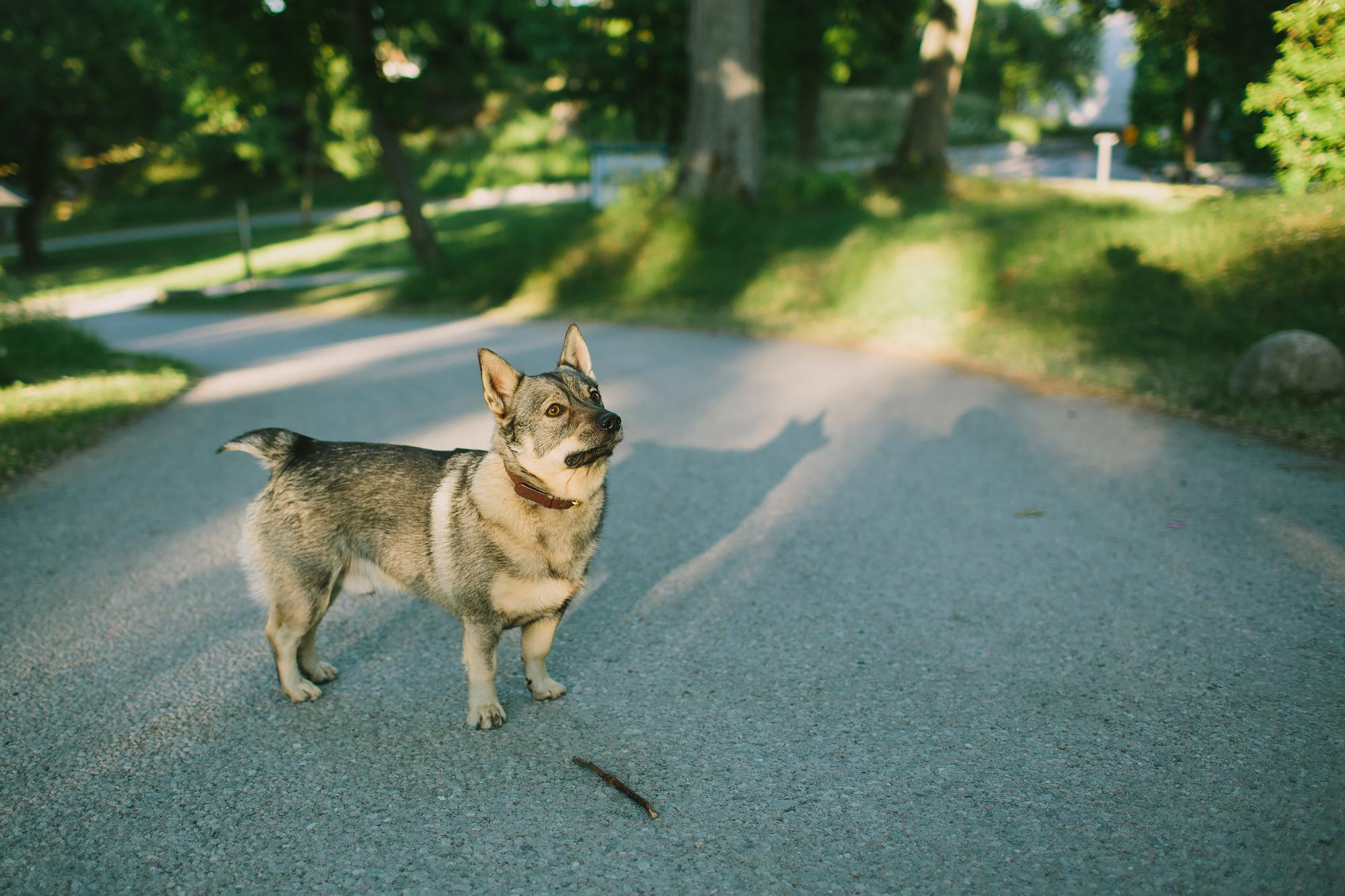 Förväntansfull hund