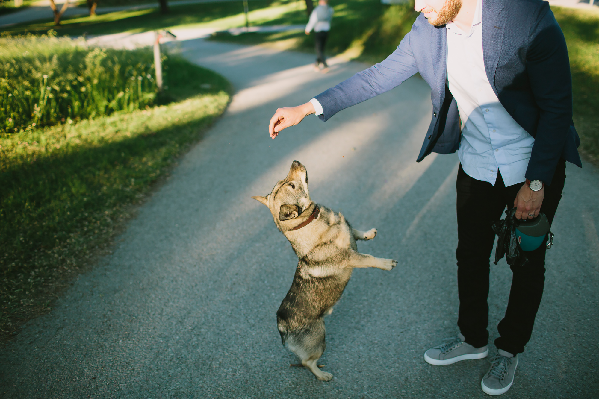 Hund hoppar efter pinne