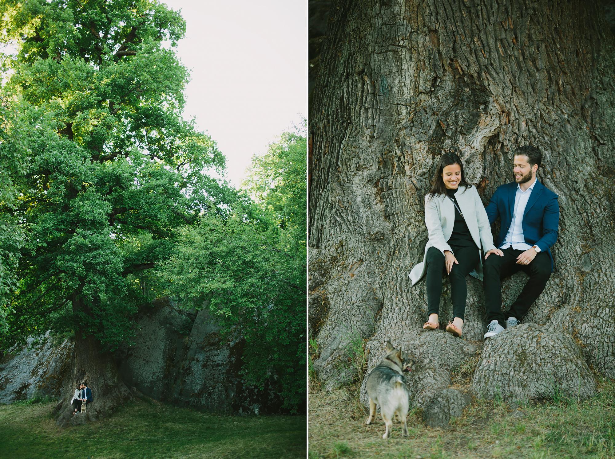 Parbilder vid den stora eken Djurgården